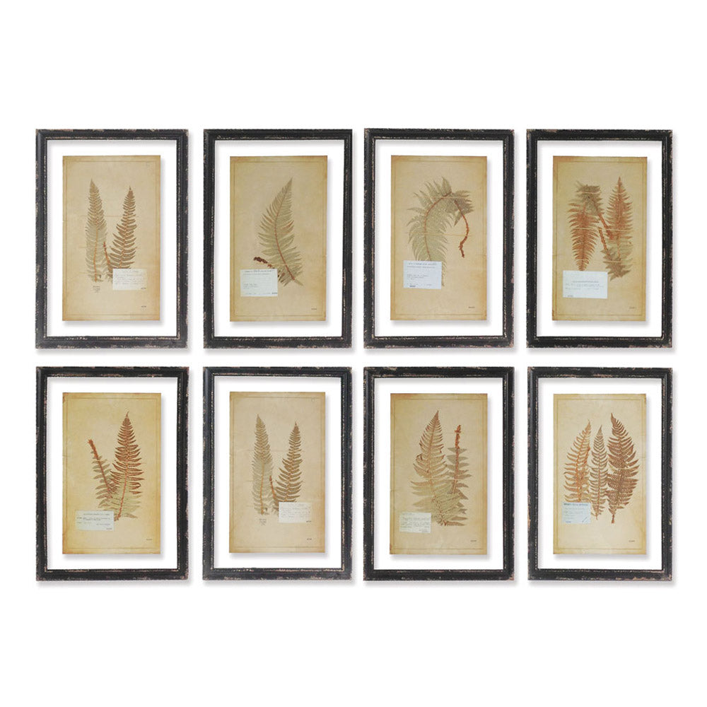 FRAMED VINTAGE FERN PRINTS, SET OF 8