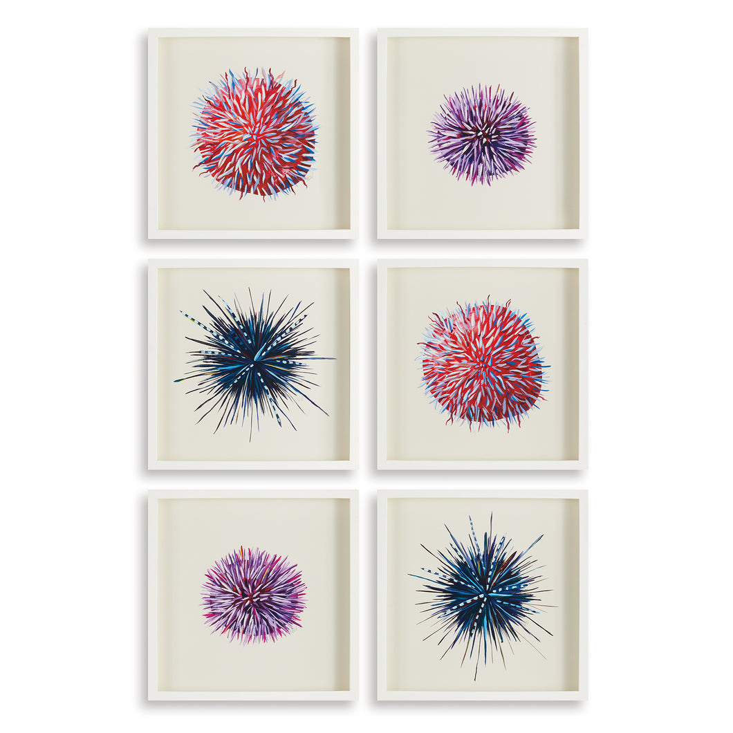 URCHIN PRINTS, SET OF 6