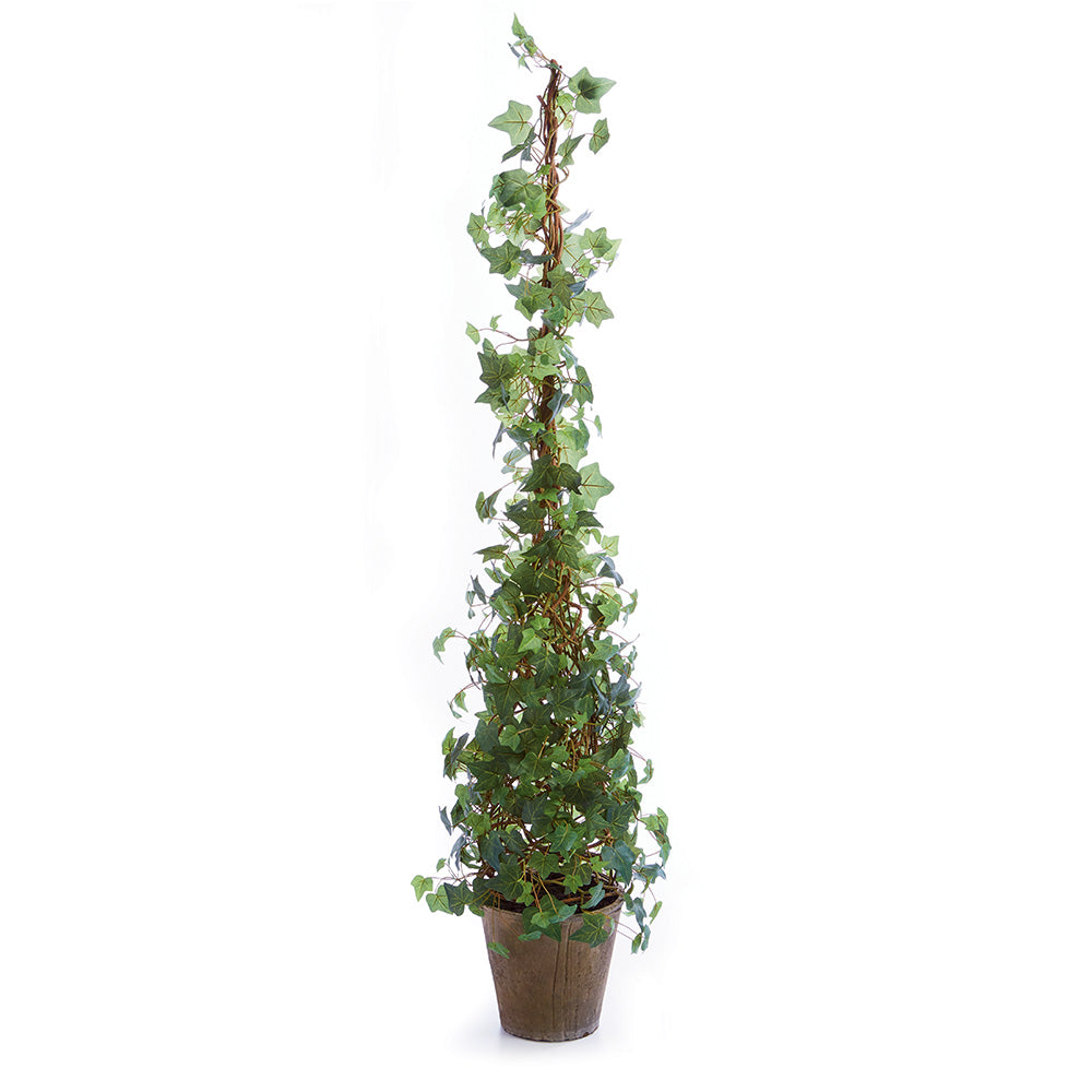 IVY CONE TOPIARY POTTED 62
