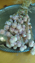 Load image into Gallery viewer, Sweet bundle of Light pink dried Globe Amaranth