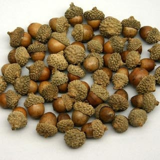 Big bag of 225 acorns for crafting weddings and decor -lovely for fall.