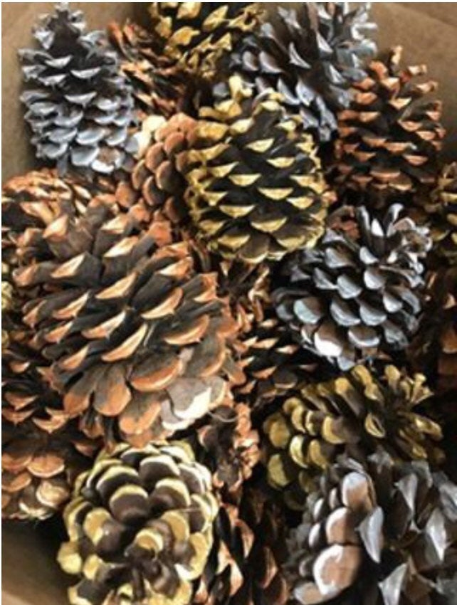 Metallic pinecone collection - silver copper gold tipped pinecones