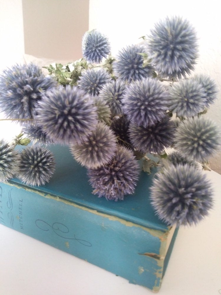 Dried Echinops bundle in pale blue grey pre order for August
