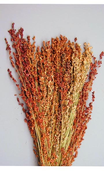 5 bundles of Broom Corn - dried grains great for Fall