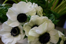 Load image into Gallery viewer, Fresh Anemones! Gorgeous colors!