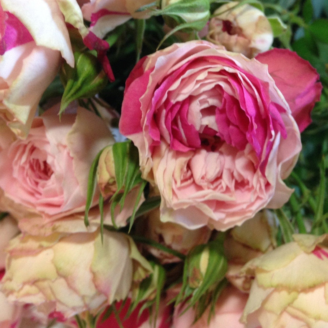 Pink speckled opal spray roses