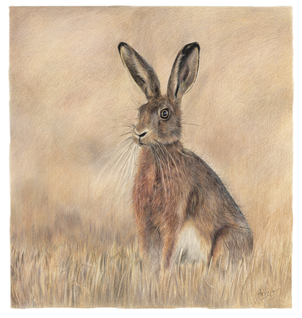 A Hare Sitting Up - 11