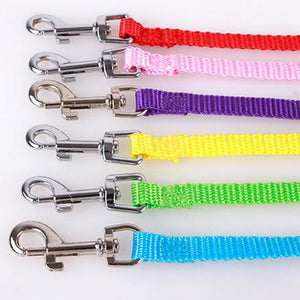 Cute Angel Wing Adjustable Dog Pet Leash Traction Training Lead and Collars Set