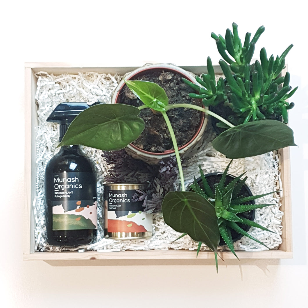 Emporio Home & Flowers - Plant Lovers Hamper