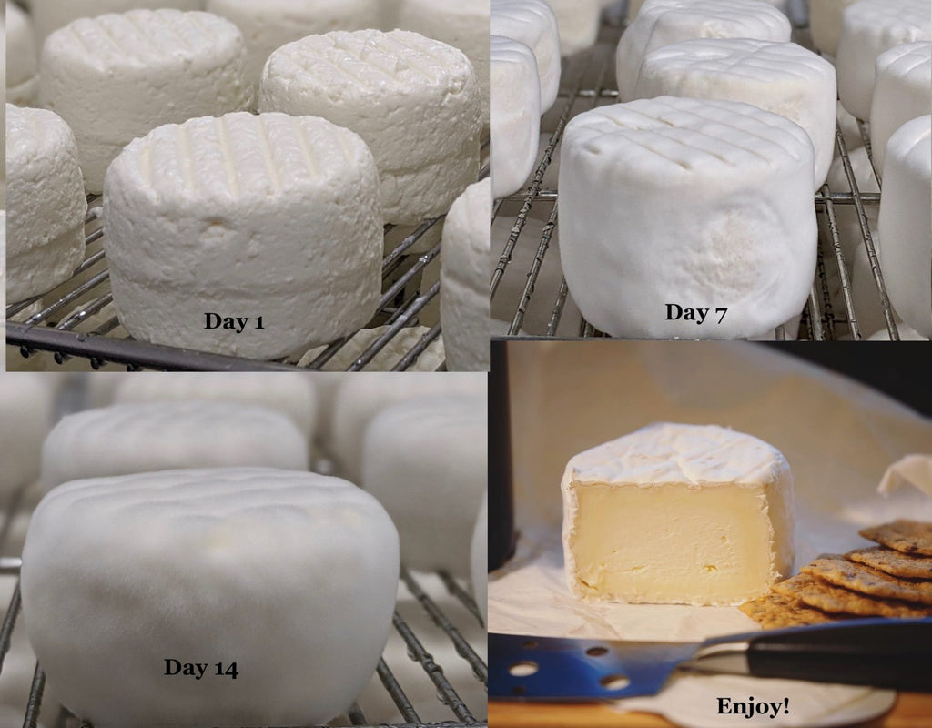 Cheesemaking stages with Ragged Point