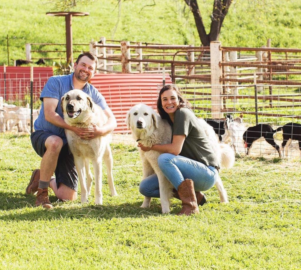 Stepladder owners Jack and Michelle with dogs Gus and Lily