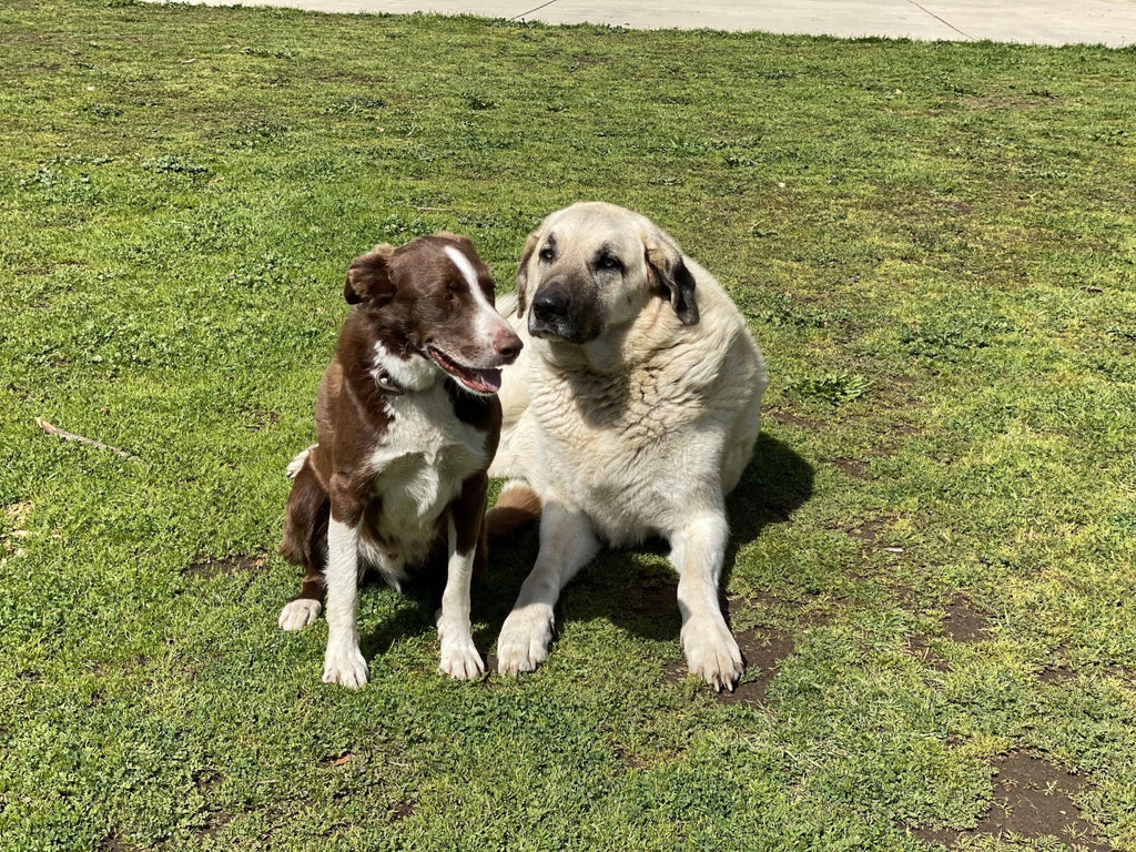 Frank and Gus - the best of friends