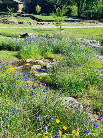 Toad Ranch in Bloom