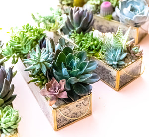 Meet Martha Mendoza-Backen of A Succulent Day!