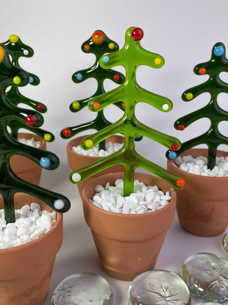 Christmas trees in a pot