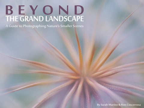 Beyond the Grand Landscape: A Guide to Photographing Nature's Smaller Scenes