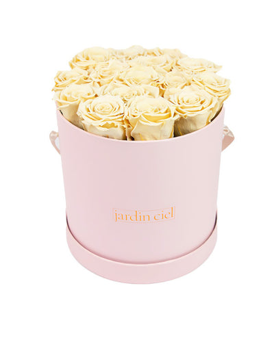 Infinity Rose, Champagner, Pink Flowerbox Size Medium