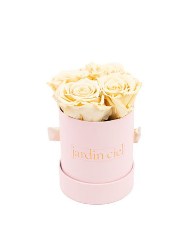 Infinity Rose, champagner, pink Flowerbox Mini