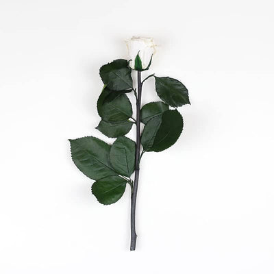 Infinity Rose Longstem | Pure White| 1 Rose - Jardin Ciel GmbH