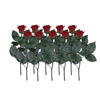 Infinity Rose Longstem | Romantic Red | 10 Rose - Jardin Ciel GmbH