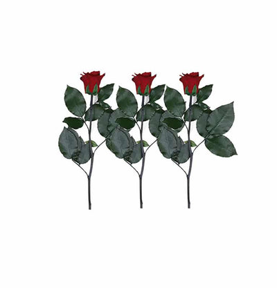 Infinity Rose Longstem | Romantic Red| 3 Rose - Jardin Ciel GmbH