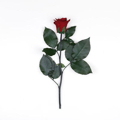 Infinity Rose Longstem | Romantic Red | 1 Rose - Jardin Ciel GmbH