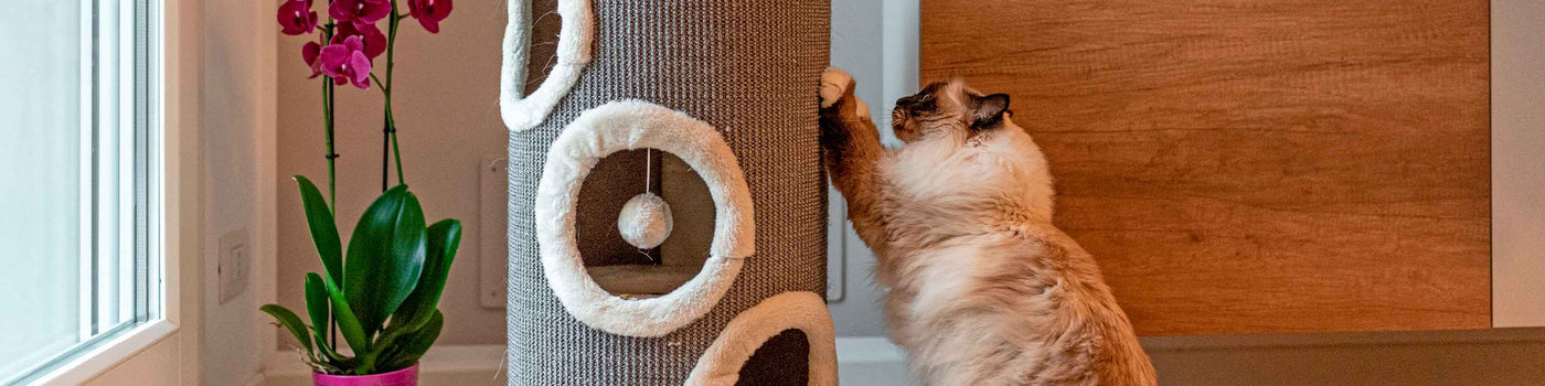 SCRATCHING POSTS AND CAT FURNITURE