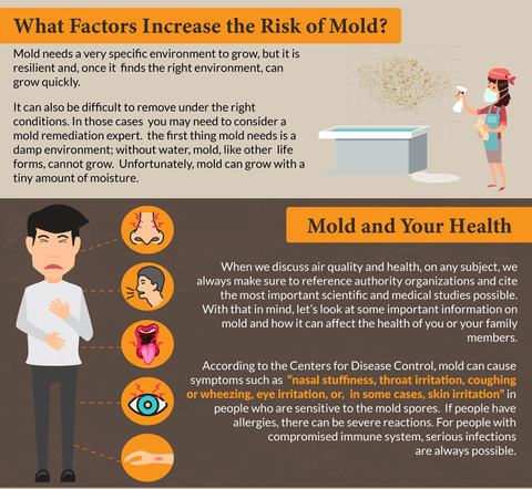 Do you know the difference between Mold and Mildew