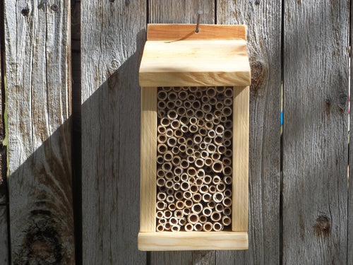 LARGE MASON BEE HOUSE  /  25 BLUE ORCHARD BEES INCLUDED
