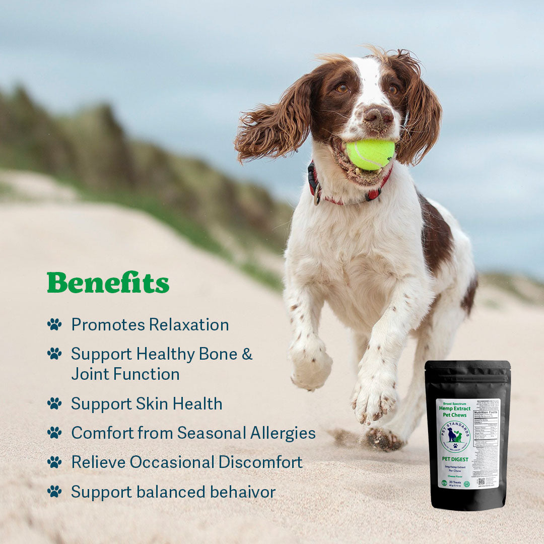 Digest CBD Chews for Dogs