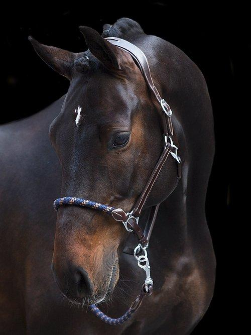 Working Halter + Lead Rope - PS Bridles