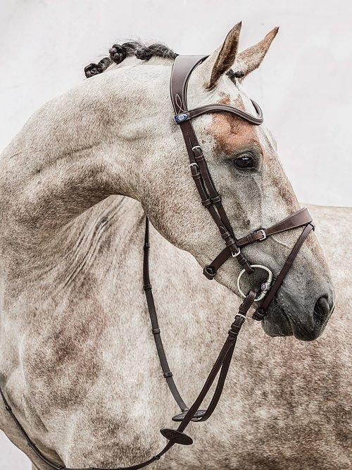 HvE - PS Bridles