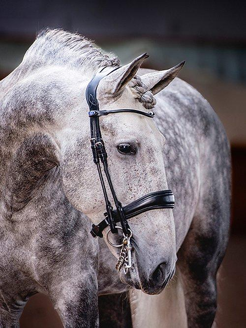 Double Bridle Passage - PS Bridles