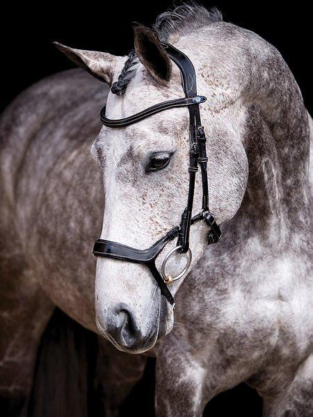 Pioneer - PS Bridles