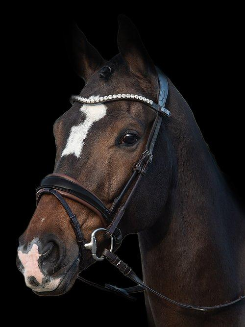 GP - PS Bridles