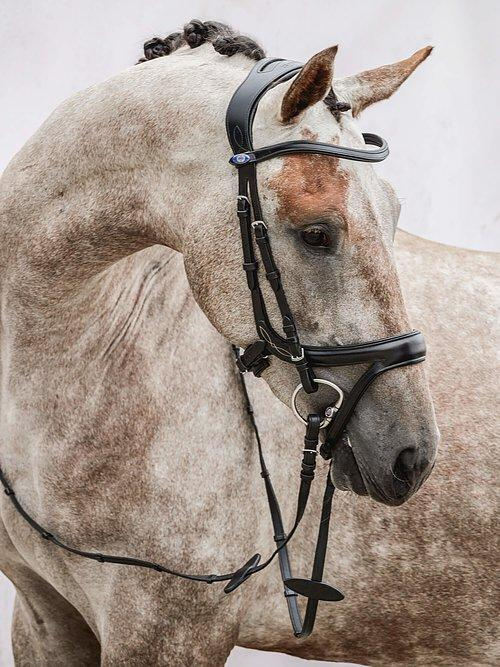 Jump Off Revolution - PS Bridles