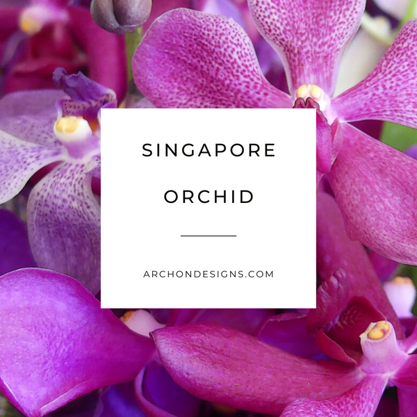Singapore Orchid Diffuser