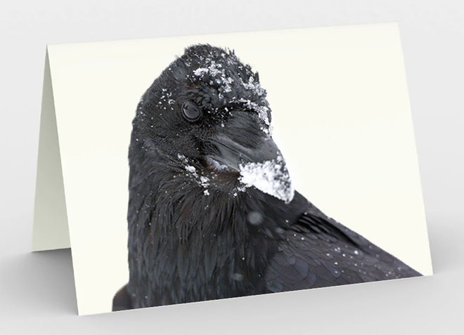 Greeting Cards - Ravens