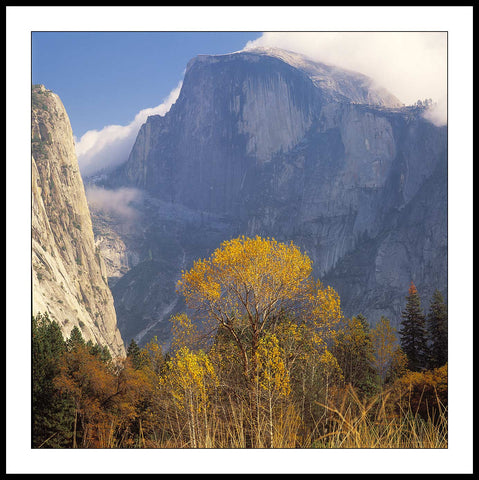 Limited ed. Nature Print - Fall Tree and Half Dome, CA