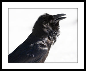 Limited ed. Raven Print - ROOSTER