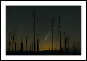 Limited ed. Nature Print - Comet NEOWISE Through Trees, OR
