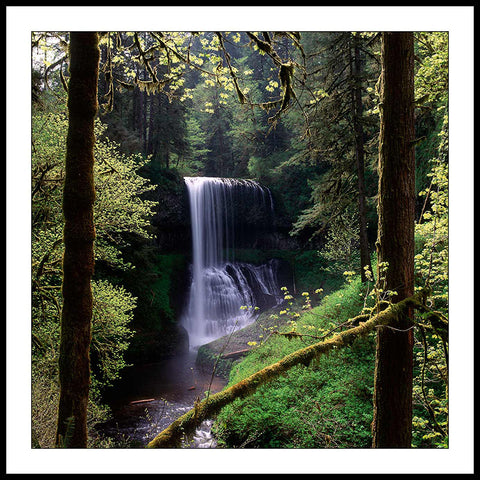 Limited ed. Nature Print - Middle North Falls and Spring Trees, OR