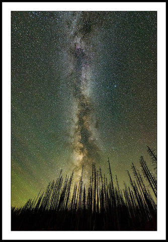 Limited ed. Nature Print - Milky Way Through Trees, OR