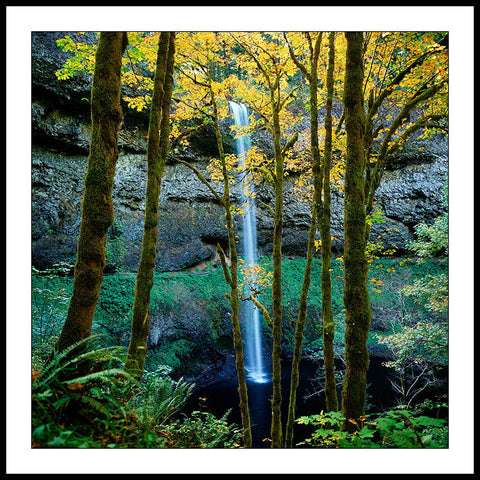 Limited ed. Nature Print - South Falls Through Trees in Autumn, OR