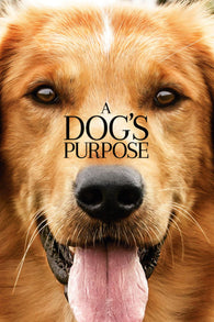 A Dogs Purpose