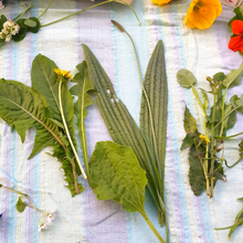 Load image into Gallery viewer, Nelson Foraging for Wild Edible Weeds Workshops
