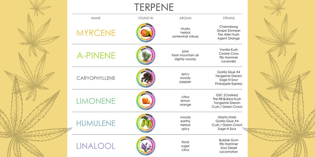 Terpenes 101: What They Are and How They Work