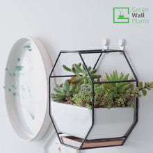 Load and play video in Gallery viewer, Iron & Ceramic Wall Hanging Planter