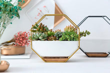 Load image into Gallery viewer, Vintage metal wall planter with succulent planted This Iron Wall Hanging Ceramic Planter is an octagonal shaped wrought iron wall basket planters. Its a wrought iron wall plant holder with a vintage metal look and feel.  Metal wall planter home depot can be placed on desk. wall planters for outdoors and indoors also great for real or artificial succulents.