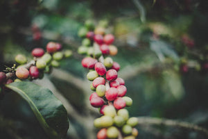 How Does Humidity Impact Coffee?